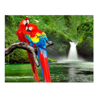 Macaws Scarlet en rainforest Postales