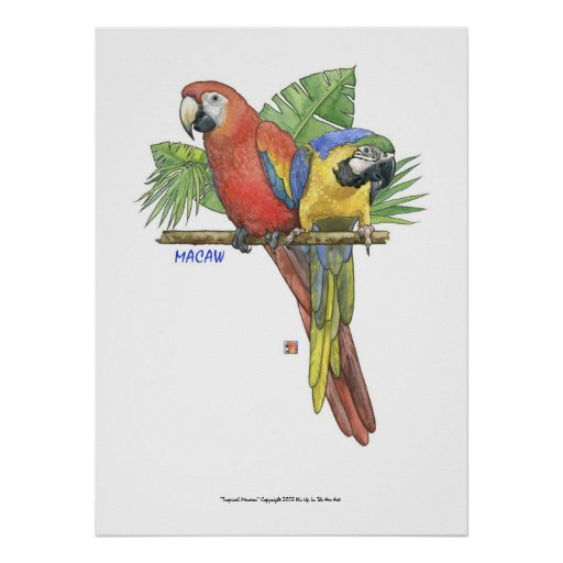 Macaws tropicales poster