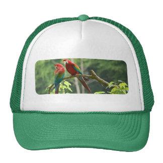 Macaws Verde-cons alas Gorros Bordados