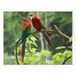 Macaws Verde-cons alas Tarjeta De Felicitación Grande
