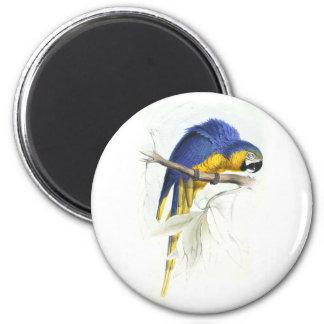 Maccaw azul y amarillo de Edward Lear Imán Redondo 5 Cm
