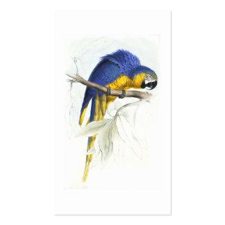 Maccaw azul y amarillo de Edward Lear Tarjetas De Visita