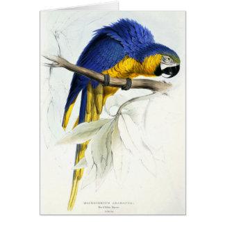 Maccaw azul y amarillo tarjeta de felicitación