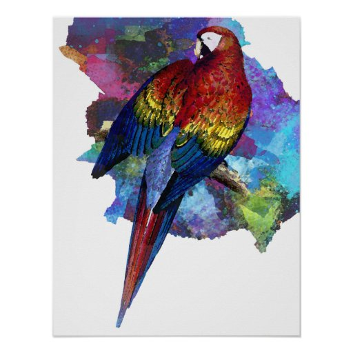 Maccaw Watercolor Bird Print Poster