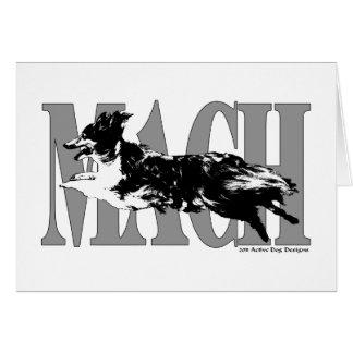 MACH Sheltie Card
