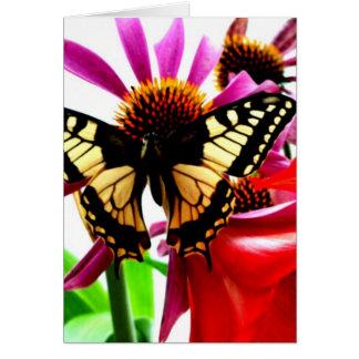 Machaon Card
