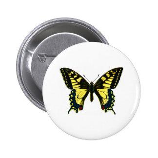 Machaon de Papilio Pins