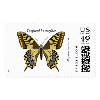 Machaon de Papilio Franqueo