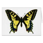 Machaon de Papilio Tarjeta De Felicitación