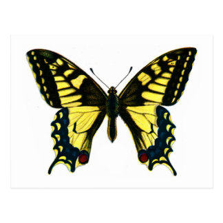 Machaon de Papilio Postal