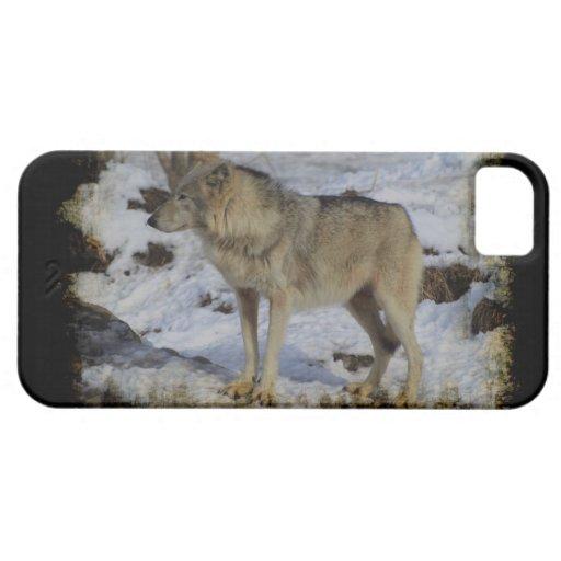 Macho alfa del animal salvaje del lobo y del Lobo- iPhone 5 Case-Mate Carcasas