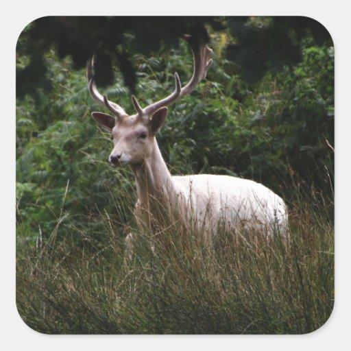 Macho blanco, ciervo, fauna, foto animal pegatina cuadrada