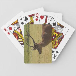 Macho del ciervo común naipes