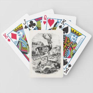 Macho del ciervo común del vintage con la gama y barajas de cartas