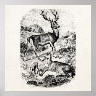 Macho del ciervo común del vintage con la gama y posters