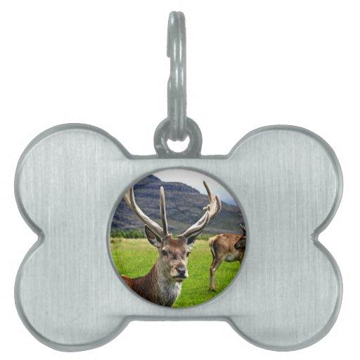 Macho del ciervo común placa de nombre de mascota