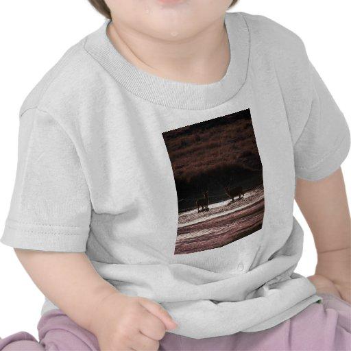 Machos en agua camiseta