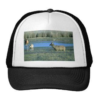 Machos en el lago gorras