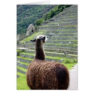 machu llama behind greeting card
