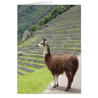 machu llama proud greeting card