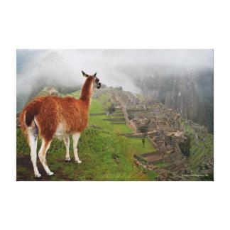 Machu Picchu Llama Canvas Print