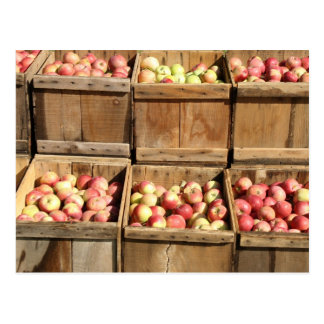 Macintosh Apples By The Crate Postcard