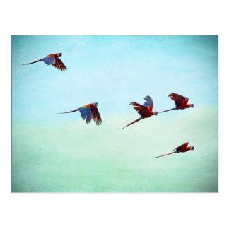 Mackaws Flying Postcard