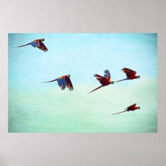 Mackaws Flying Poster