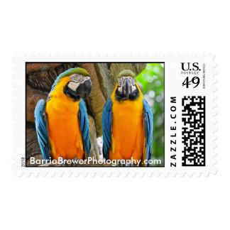 Mackaws Stamp