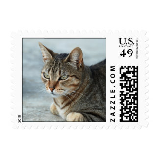 Mackeral Tabby Small Stamp