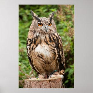 MACKINDER EAGLE OWL POSTER