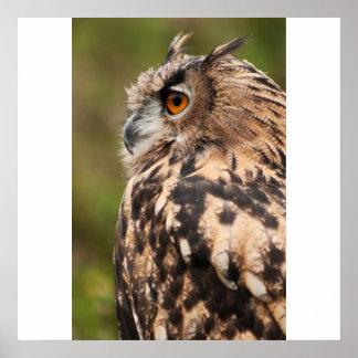 MACKINDER EAGLE OWL profile Poster