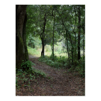Maclay Gardens Postcard