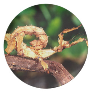 Macleay's Spectre (Spiney Stick Insect), Melamine Plate