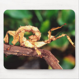 Macleay's Spectre (Spiney Stick Insect), Mouse Pad
