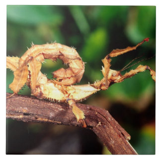 Macleay's Spectre (Spiney Stick Insect), Tile