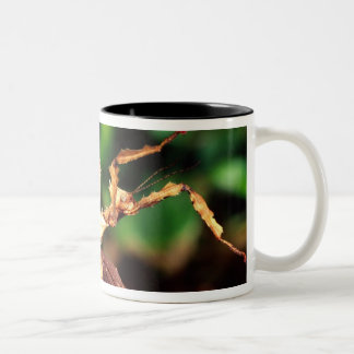 Macleay's Spectre (Spiney Stick Insect), Two-Tone Coffee Mug