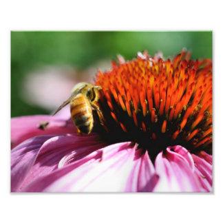 Macro Bee On Flower 10x8 Nature Print Photo