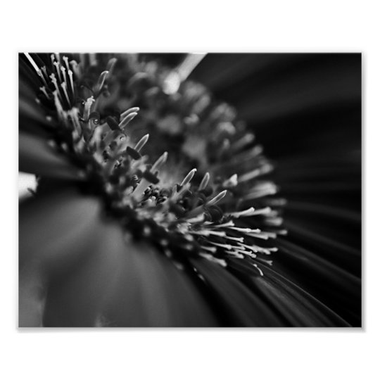 macro black and white flower photography poster zazzlecom