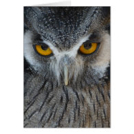Macro Black and White Owl Greeting Cards