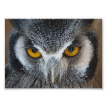 Macro Black and White Owl Photo Print