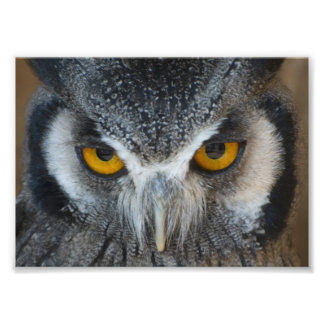 Macro Black and White Owl Photo Print