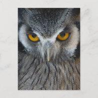 Macro Black and White Owl Post Card
