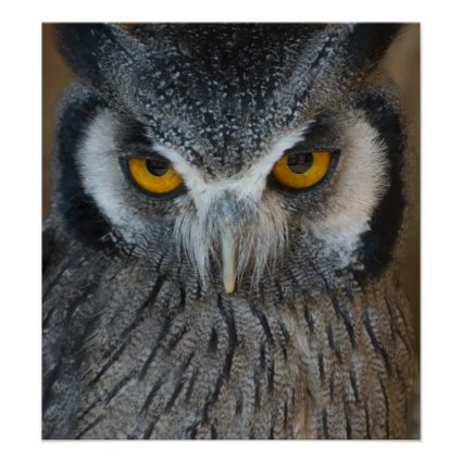 Macro Black and White Owl Posters