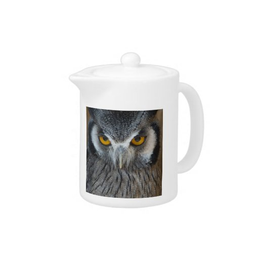 Macro Black and White Scops Owl