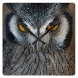 Macro Black and White Scops Owl Clocks