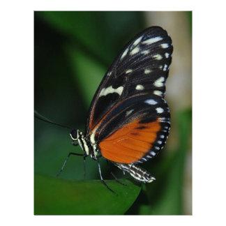 Macro Butterfly Letterhead Design