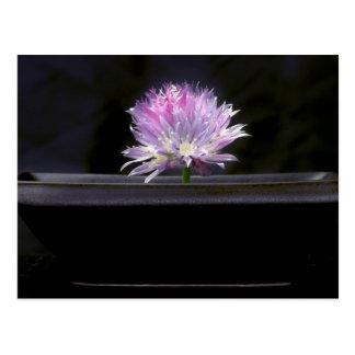 Macro Chive Flower Postcard
