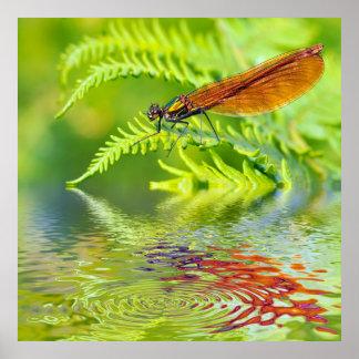 Macro damselfly on fern above water poster