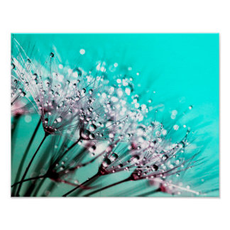 Macro Dandelion Seeds Water Drops Photo Poster